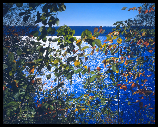Dark Autumn Leaves, 1999, Oil on Canvas, 36x45""